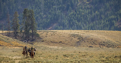 Yellowstone National Park (Dimitri.Bernard) Tags: