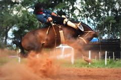 Tavares e Pantera da Syn Querencia (Eduardo Amorim) Tags: gaúcho gaúchos gaucho gauchos cavalos caballos horses chevaux cavalli pferde caballo horse cheval cavallo pferd pampa campanha fronteira quaraí riograndedosul brésil brasil sudamérica südamerika suramérica américadosul southamerica amériquedusud americameridionale américadelsur americadelsud cavalo 馬 حصان 马 лошадь ঘোড়া 말 סוס ม้า häst hest hevonen άλογο brazil eduardoamorim gineteada jineteada