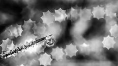 Drop - 6488 (ΨᗩSᗰIᘉᗴ HᗴᘉS +50 000 000 thx) Tags: drop droplet bw macro noiretblanc blackandwhite belgium europa aaa namuroise look photo friends be wow yasminehens interest eu fr greatphotographers lanamuroise flickering