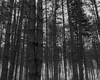 Confusion in the forest (pap1tyy) Tags: forest tree woods leves sticks bulgaria
