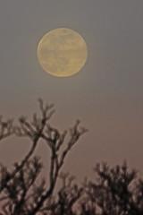 Spring Supermoon,Aberdeen_Mar 19_401 (Alan Longmuir.) Tags: arteffect grampian aberdeen misc sky moon springsupermoon
