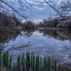 Bluehour (ivanstevensphotography) Tags: trees sky reflection water clouds reeds branches common epsom epsomcommon stewpond
