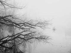 reflection (Darek Drapala) Tags: reflection reflects water waterscape skaryszewski bw blackwhite blackandwhite trees tree panasonic poland polska panasonicg5 park plants nature autumn