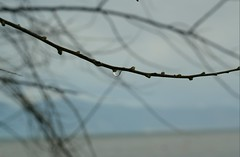 Behind The Obvious : Natures Tear (Storyteller.....) Tags: nature tear drop tree winter branch blur sea beach sky blue