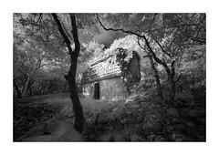Sabacche 5 (Sandra Herber) Tags: infrared maya mayan mexico ruins sabacche5 yucatan