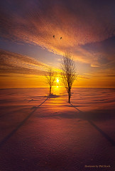 Just You and I (Phil~Koch) Tags: dramatic unity trending popular canon rural fineart arts shadow sun sunrise light peace wisconsin shadows endless pastel earth sunlight horizon blue frost frozen ice winter cold bluehour snow shore lakemichigan water trees two birdsgoldenhour