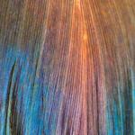 Feuille de Spathiphyllum irradié,! thumbnail