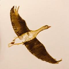 B181-365 one bird a day - Goose trip to Schoorl (www.doortje.nl) Tags: vogel pájaro uccello passarinho طائر oiseau птица birdo voël 鸟 doortjenl 1tekeningperdagnl pen ink lamy fountainpen black white