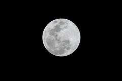 DSC07404 (阿狗) Tags: sony a7rii a7rm2 canonef70200mmf4lusm 月亮 moon 夜景 nightscenery
