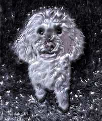 Dog Nico (Jui Jah Fari) Tags: juijahfari dog hund tier animals art kunst artwork kunstwerk artist künstler digital digitalart artistic weis schwarz schwarzweis paint painting digitalpaint photoart fotokunst