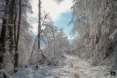 Perfect day for hiking (Ivica Pavičić) Tags: snow trees treesundersnow medvednica mountain mountaineering winter winterlandscape landscape croatia hiking
