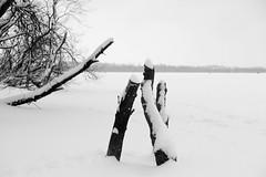 Lake (Listenwave Photography) Tags: foveon nature натура пейзаж санктпетербурга лахта river merrill sigmadp3mfoveon landscape winter listenwavephotography