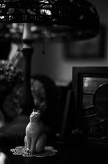 and I find the light in the darkness (HiroAranoJPN) Tags: nikonf nokton58mmf14sliin trix400 film filmphotography blackandwhite cat ceramic figurine saga takeo 喫茶チャコ
