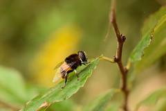 DSC_6716 (Hachimaki123) Tags: 所沢航空記念公園 tokorozawaaviationmemorialpark 日本 japan 所沢市 埼玉県 所沢 tokorozawa saitama animal insect insecto 虫 動物