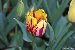 IMG_5585 (Roger Kiefer) Tags: dallas arboretum flowers outdoors beauty nature