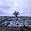 Lone Tree, Winskill Stones Nature Reserve, Settle, North Yorkshire, UK (Geoff Dickinson) Tags: hawthorn limestonepavement winskillstones ribblesdale northyorkshire