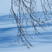 Winter Branches - Branches d'hiver
