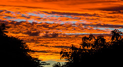 last night's natural wonder__ (Ardan⋆) Tags: vivid sunset red orange yellow trees forest home deck australia awesome nature naturephotography sky clouds coastal colours cloudscape naturelandscape naturelover patterns textures outside outdoors photoart
