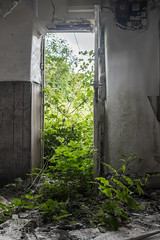 IMG_9429 (DanMarty92) Tags: nature weeds green foliage doorway open invade urbanexploration urbex interesting fun spooky coloursplash nettles