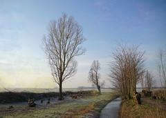 a very cold morning walk (kelsk) Tags: vockestaertpolder polder kelskphotography winter trees bomen texture delft fields frost vorst