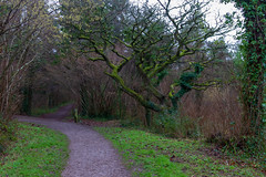 Peak Hill-1 (Sheptonian) Tags: somerset rural scenic landscape trees fauna grassland