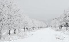 Black&white (darek_gruszka) Tags: poland winter frost snow trees ice cold black white january