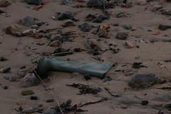 IMG_5334 (monika.carrie) Tags: monikacarrie wildlife scotland aberdeen dolphins dolphin cetacean mammals