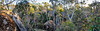 baileys rocks panorama - 1010 (liam.jon_d) Tags: australia australian billdoyle boulder dergholm dergholmstateforest evening granite granitic landscape landscapeimset largeboulder lastlight lichen lowlight moss mossrock outdoor panorama panoramic pickmeset reserve rock stone stoney stony sunset tor tree victoria victorian westernvictoria