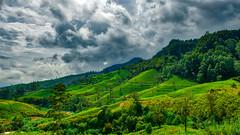 YOBEL_2018-04-28-LKA_3934.jpg (yobelprize) Tags: 2018 lka cloudscape nature yobelmuchang srilanka tea plantation dramaticsky fields outdoors nikond810 green yobel nikon muchang nanuoya centralprovince lk