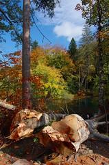 Autumn forest (sfryers) Tags: plitvicelakes plitvičkajezera nationalpark forest lake trees wood log unesco worldheritagesite autumn leaves croatia hrvatska smc pentaxda 15mm 14 limited