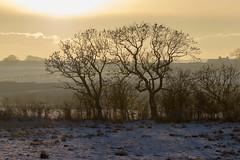 A hazy shade of winter (Liam Waddell) Tags: winter sun hazy shade back road kilwinning stevenston trees grass snow clouds mist hedge ayrshire scotland farm barn