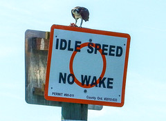 Idle Spee - No Wake (soniaadammurray - On & Off) Tags: digitalphotography bird sign boating fish eat sky macro macromondays artchallenge nature exterior
