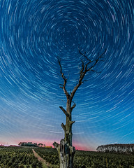 Star trails (Andy barclay) Tags: star stars sky trails galaxy milkyway milky way long exposure stacked photostack lincolnshire louth skyscape wide sigma nikon d7100 1020mm night cold winter tree
