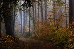 The sun will guide you (Petr Sýkora) Tags: les mlha podzim trees forest autumn sun path