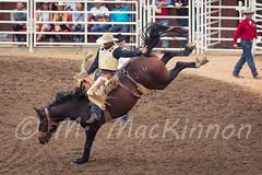 Calgary Stampede 2016 (tallhuskymike) Tags: calgarystampede event rodeo calgary stampede prorodeo 2016 horse cowboy alberta outdoors greatestoutdoorshow