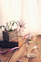 """Today margaritas"" (mariajoseuriospastor) Tags: flowers margaritas bodegon stilllife"