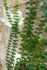 Tree bark (jan.stefka) Tags: 2018 usa tree anhingatrail bark canoneos7d creeping evergladesnationalpark ef100400 florida