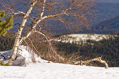 Hornisgrinde (pbantz67) Tags: hornisgrinde allemagne germany blackforest forêtnoire hiver winter arbre tree