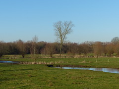 Now Spring Is In the Air (6) (Marit Buelens) Tags: belgië belgium landscape nature naturereserve natuurgebied natuurreservaat gemeneweidebeek flanders vlaanderen brugge bruges grass field pool water poel tree heron reiger spring lente