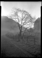 so far away (7things_and_photo) Tags: blackandwhite film monochrome fomapan200 nature mist largeformat 5x7 acuroln spur