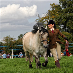 Jogging (meniscuslens) Tags: horse pony grey gray field grass arena event lady woman hat jodphurs sky clouds bucks county show aylesbury weedon buckinghamshire