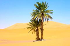 240_F_70501368_6N6OEwPJNTFV3NZd8HGfLiIuvWr5F3iC (lhoussain) Tags: camel another life sunrise sunset calm relax berber women