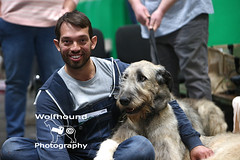 img_8811 (HoundPhotographer) Tags: irishwolfhound wolfhound hound crufts crufts2019 showdog dogshow