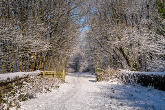 Tunnel Vision (Matthew_Hartley) Tags: winter trees tree snow snowy helmshore haslingden rossendale lancashire northwest england uk britain panasonic gm1 microfourthirds m43 mft vario 1232 1232mm