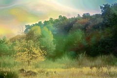 The edge of a forest - Am Waldesrand (b_kohnert) Tags: digitalpainting digitalart trees waldrand wald forest landschaft landscape nature natur