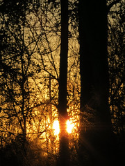 Sun Setting Friday Night. (dccradio) Tags: lumberton nc northcarolina robesoncounty outdoor outdoors outside nature natural canon powershot elph 520hs tree trees woods wooded treebranch branch branches treebranches treelimb treelimbs sun sunlight sunshine fadingsun settingsun sunset silhouette golden goldensky