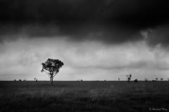Presque seul … (Michaël T.) Tags: nb bw noiretblanc blackandwhite monochrome hautesfagnes belgique belgium paysage landscape nature arbre tree