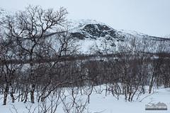 Pikku-Malla (kevin-palmer) Tags: finland finnishlapland arctic europe kilpisjärvi cloudy overcast march winter snow snowy scandinavianmountains birchtrees mallastrictnaturereserve enontekiö nikond750 tamron2470mmf28 pikkumalla