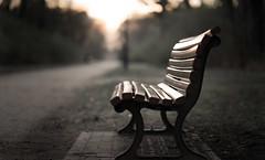 Calm (--Conrad-N--) Tags: bokeh bank bench seat park reflection light sony sunset shadow wood grass golden