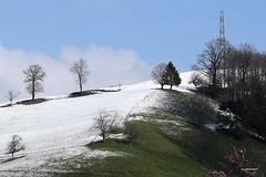 letzter Schnee im Frühling (phototom12) Tags: landschaft winter frühling schnee bäume strommast